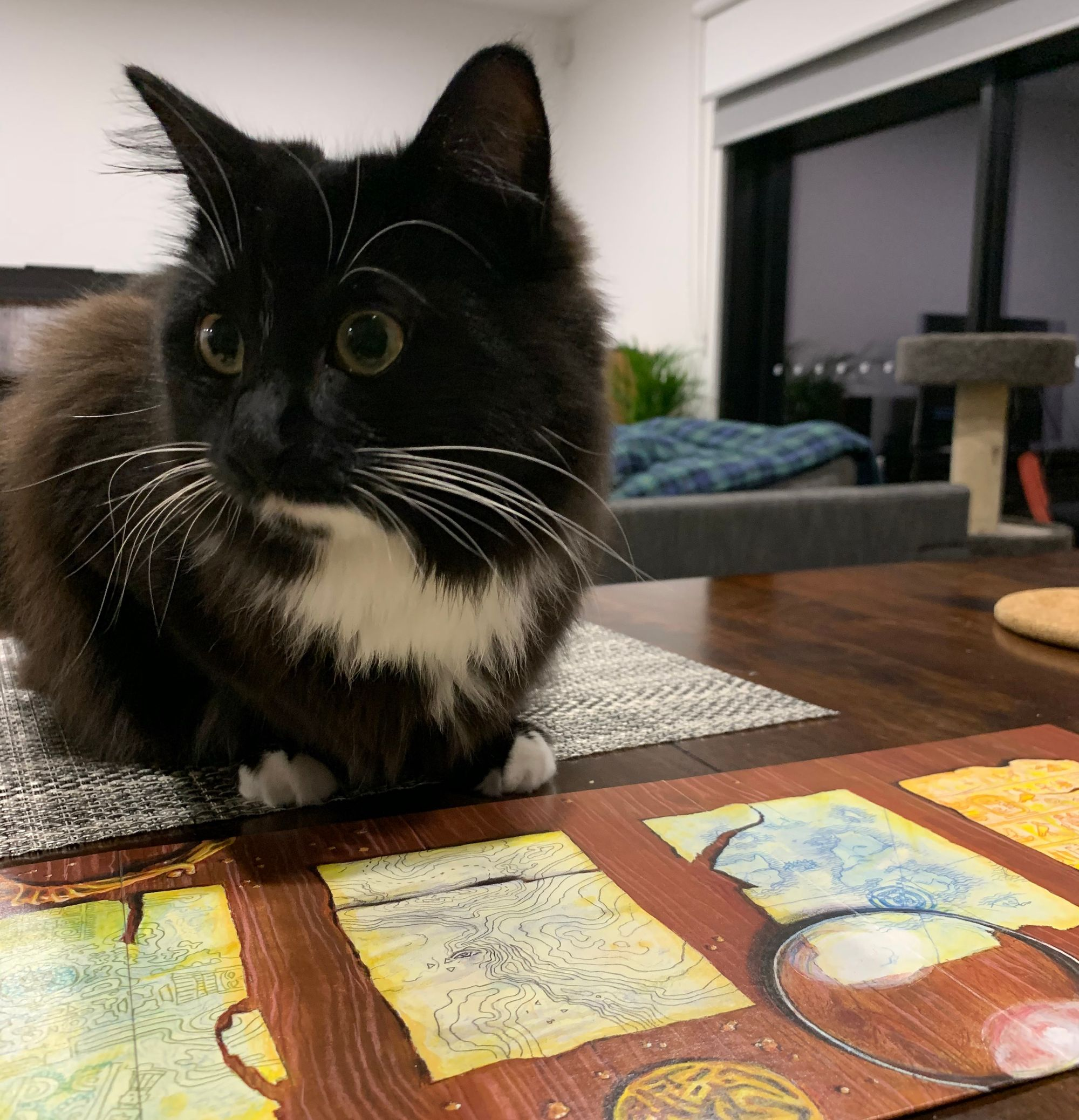 Photo of a black and white cat sitting on top of a Lost Cities board